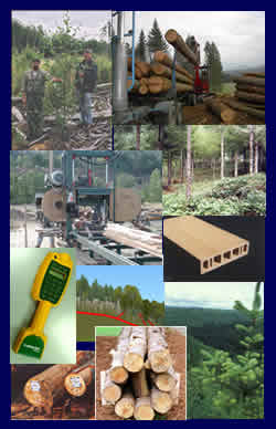 Innovation in forestry images