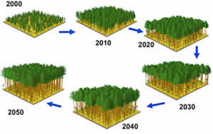 Forest stand growth over time using LMS